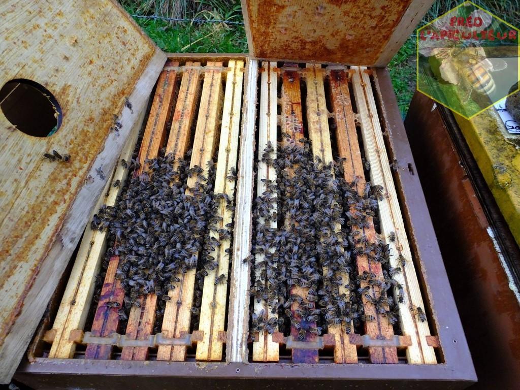 abeille apiculture bi-ruche plastique nicot