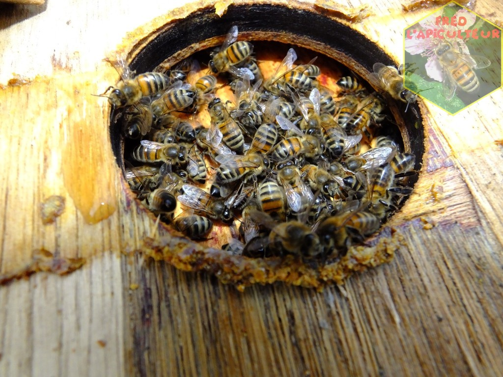 abeille apiculture population hiver