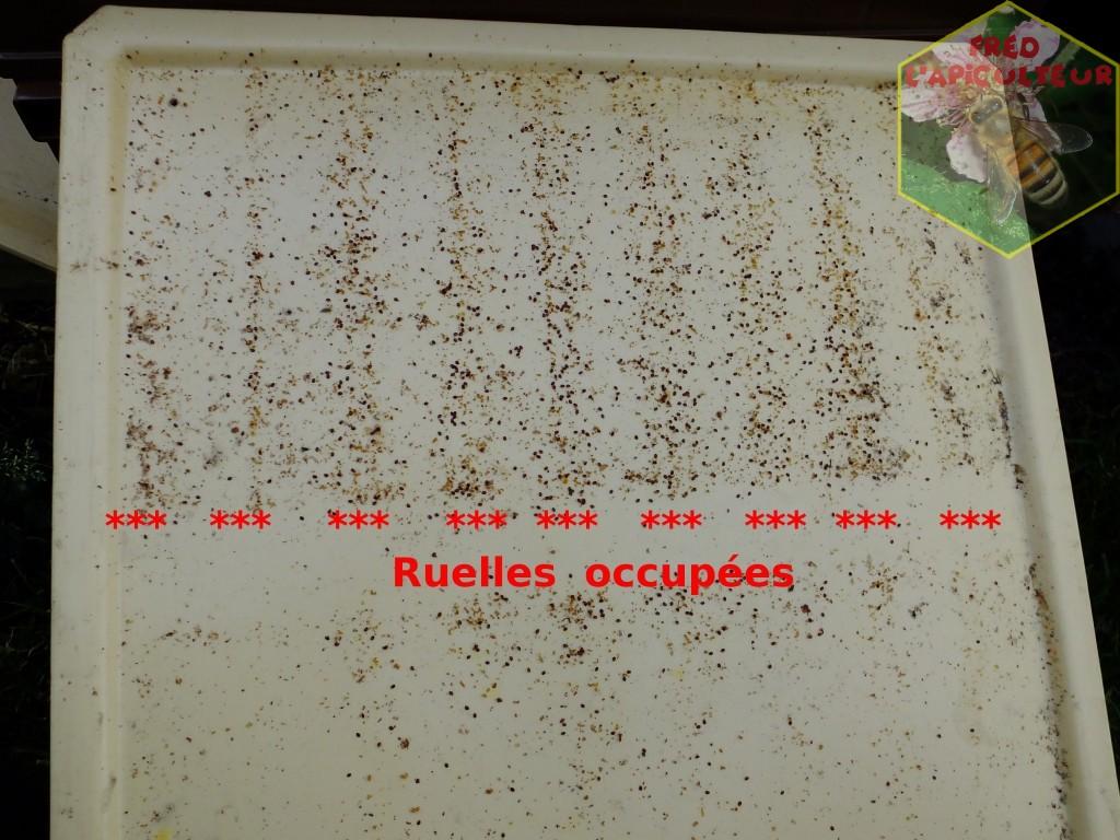 Traitement anti-Varroa à l'acide oxalique