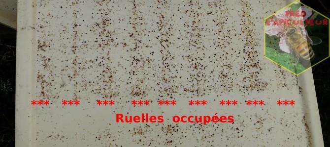 Traitement anti-Varroa à l'acide oxalique (suite)