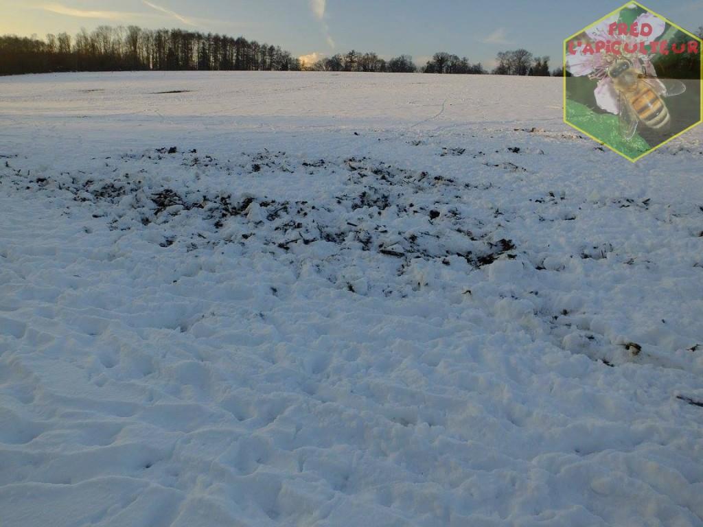 sanglier traces neige