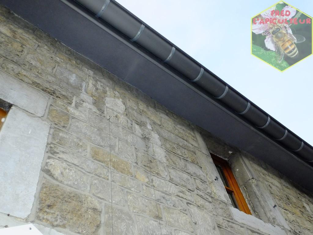 hirondelle fenêtre nichoir aménagement