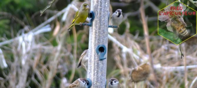 Nourrissage des oiseaux au rucher