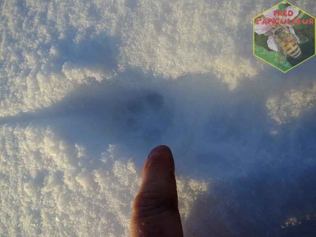 empreinte renard neige