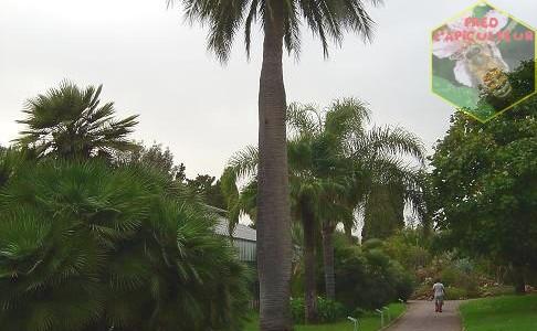 Le Parc Municipal Olbius Riquier à Hyères-les-palmiers (Var-2008)