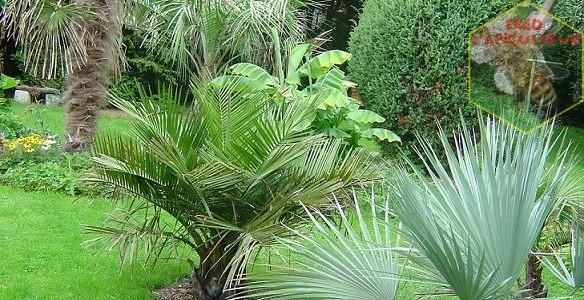 Mon Jardin en 2010