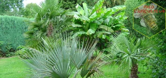 Mon jardin en 2007