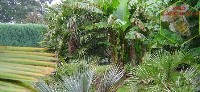 Mon jardin en 2008