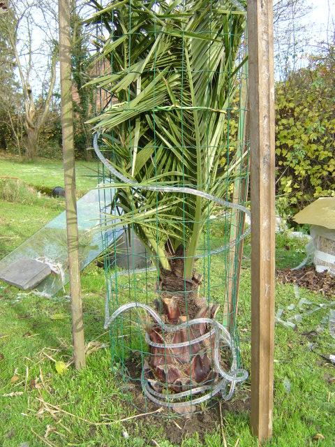 protection hivernale des plantes frileuses exotiques et