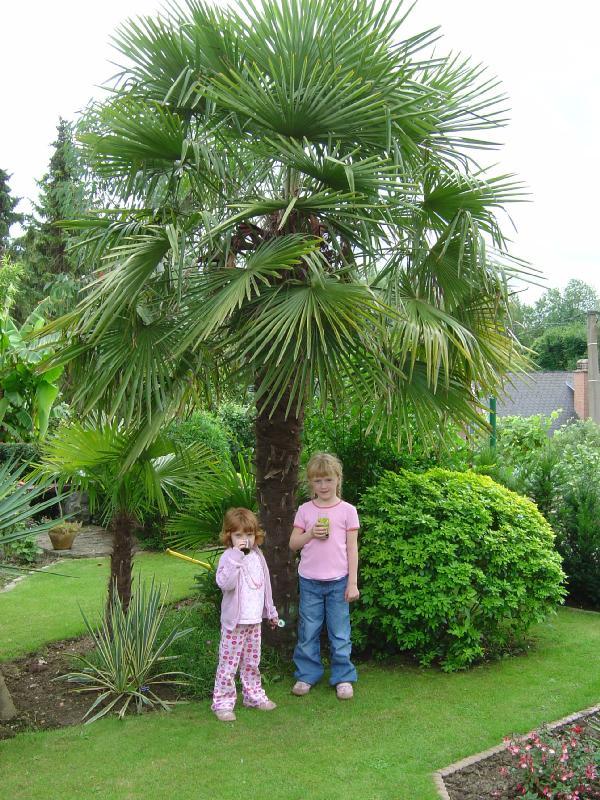 Le jardin exotique de ariane et christian ravijst for Plante exotique jardin