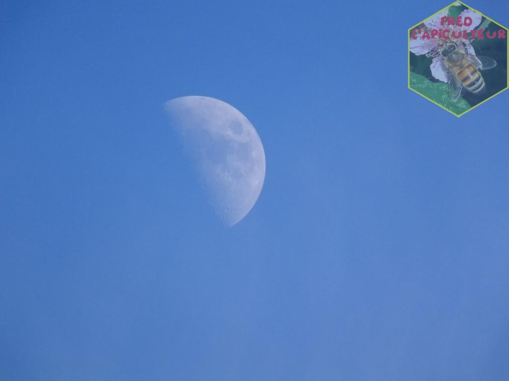 clair de lune en journée