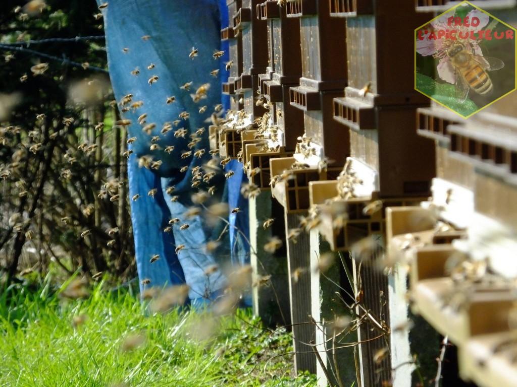 vol-proprete-abeille-ruche