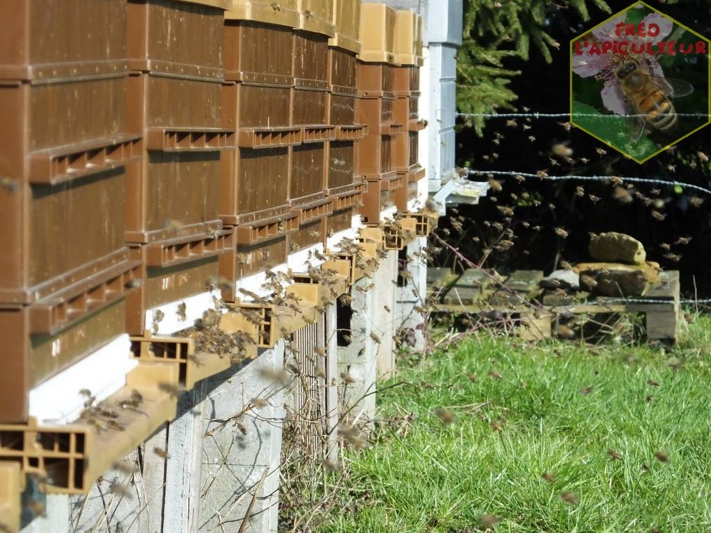 vol-proprete-abeille-ruche-3