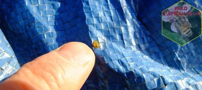 Vol de propreté au rucher!