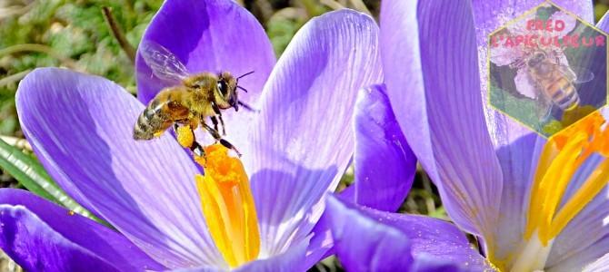 Le soleil est de retour, les abeilles font de l'exercice!
