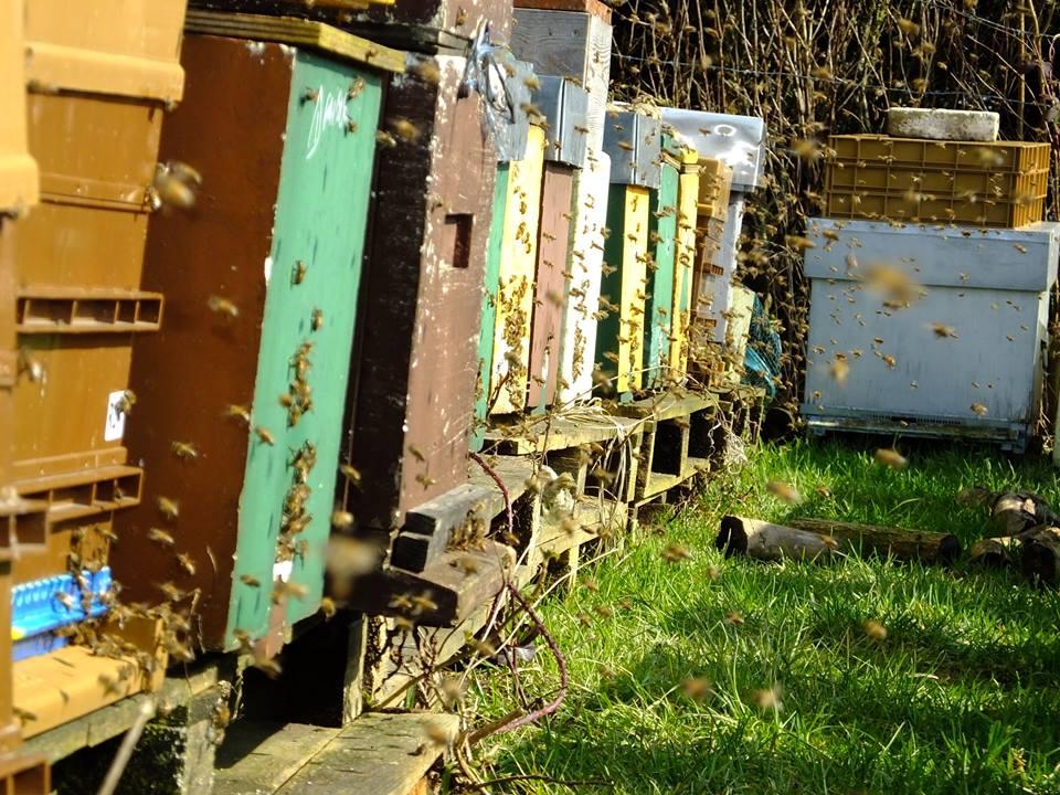 Sortie printanière des abeilles