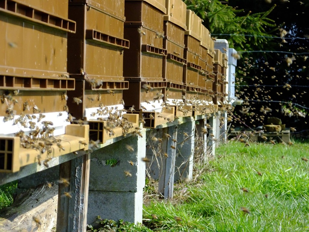 Sortie printanière des abeille