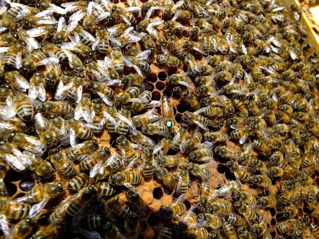 visite printemps ruche abeille