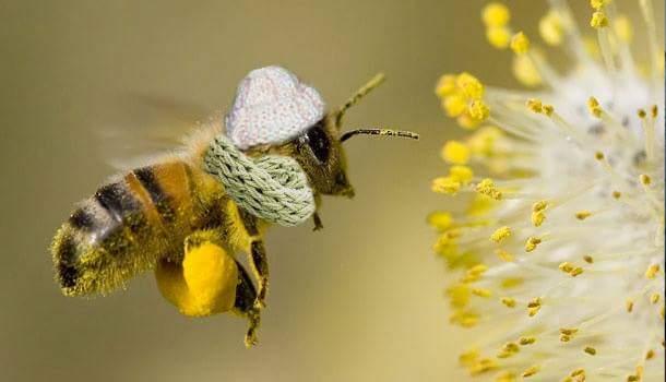 abeille-echarpe-bonnet
