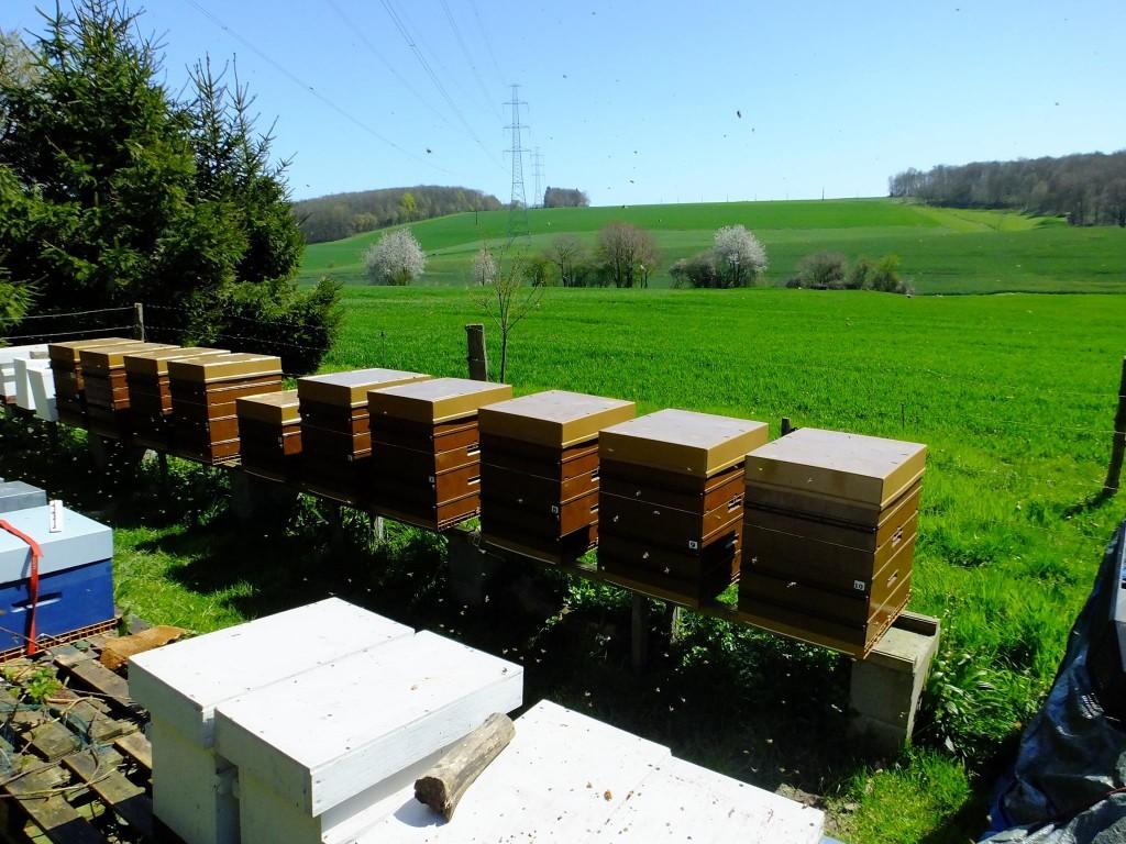 rucher printemps miellée