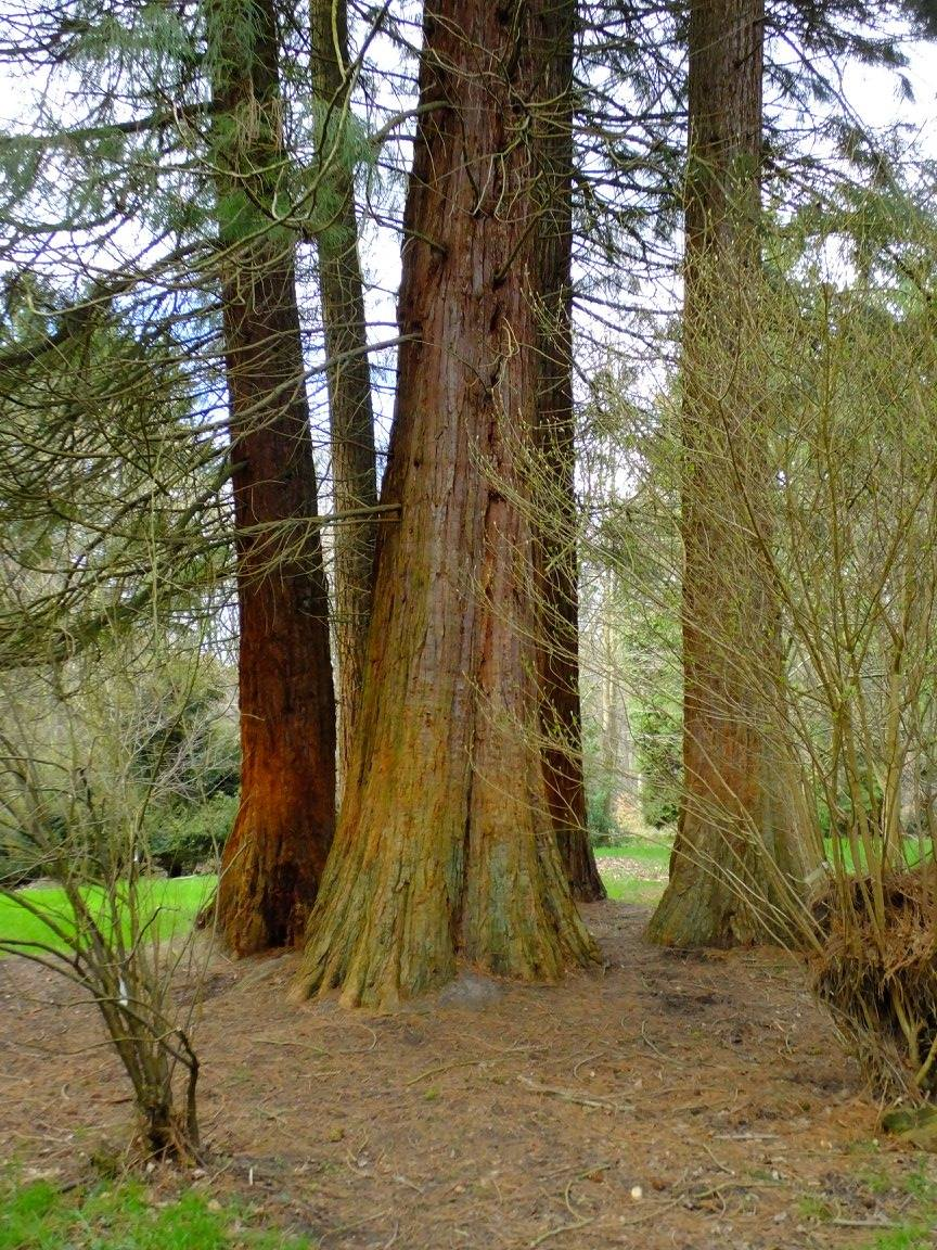sequoia parc mary rond-chene esneux