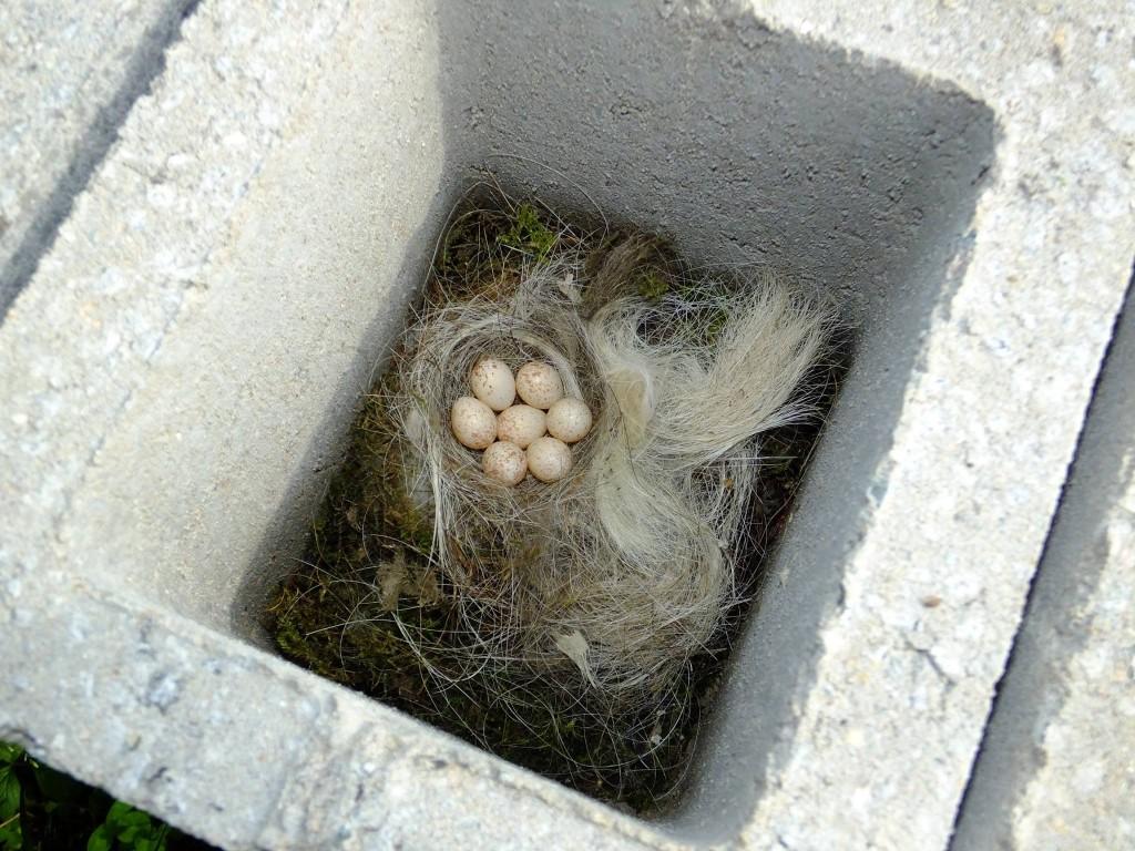nid de mesange dans un bloc de béton
