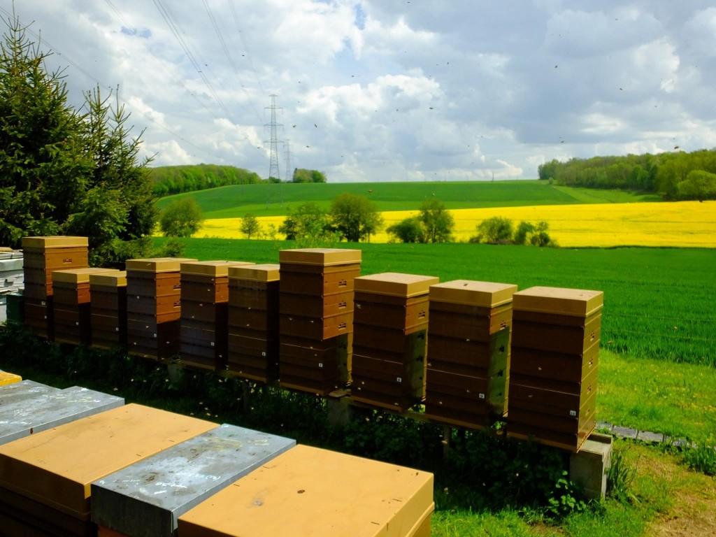 ruche-abeille-miellee-colza