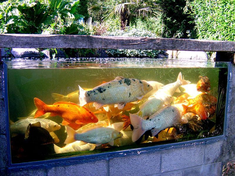 Il y a presque 20 ans...construction du bassin à carpes koï! - FRED ...