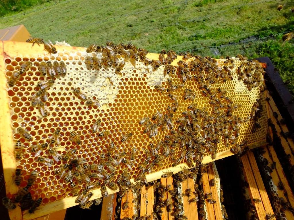 cadre de miel hausse