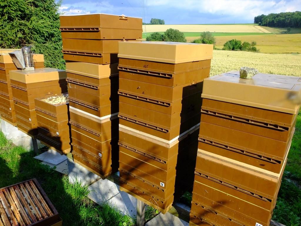 chasse-abeille miel été