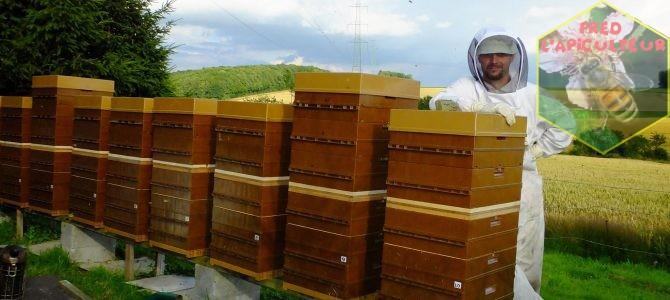 Pose des chasses-abeilles sur la miellée d'été
