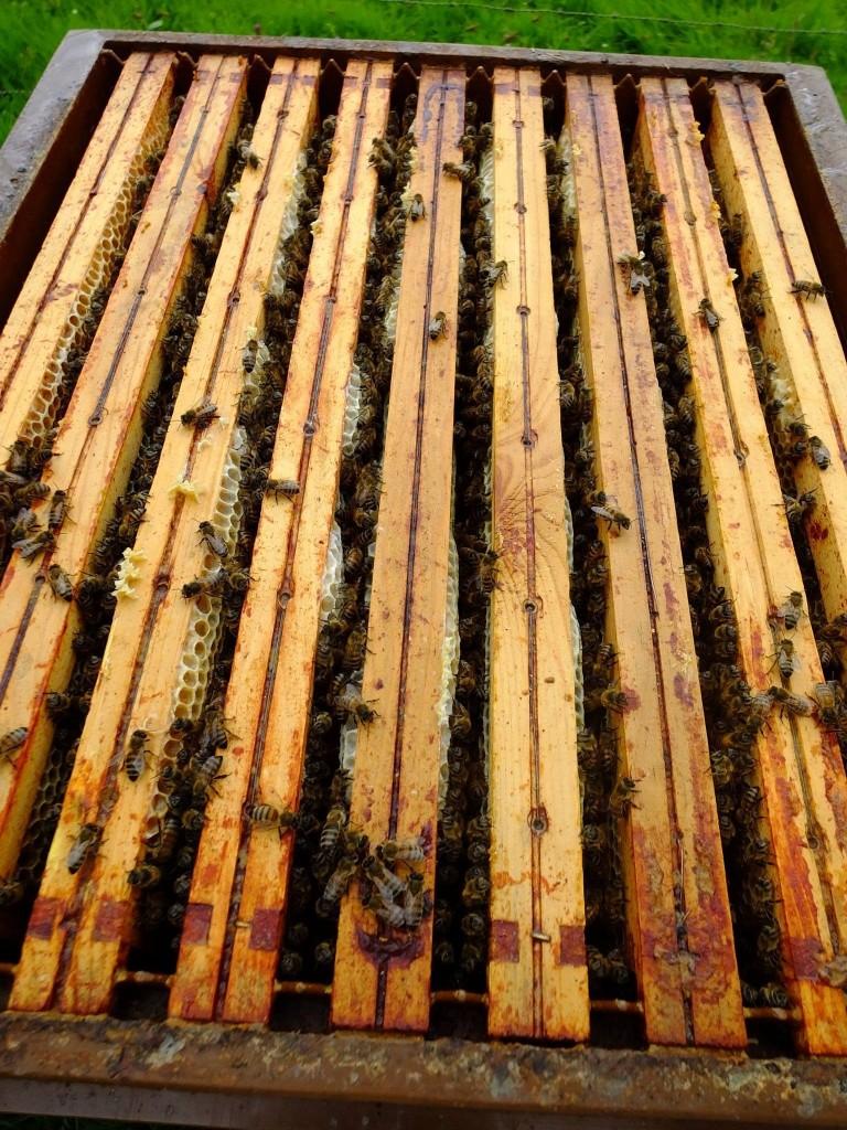 hausse de miel de châtaignier