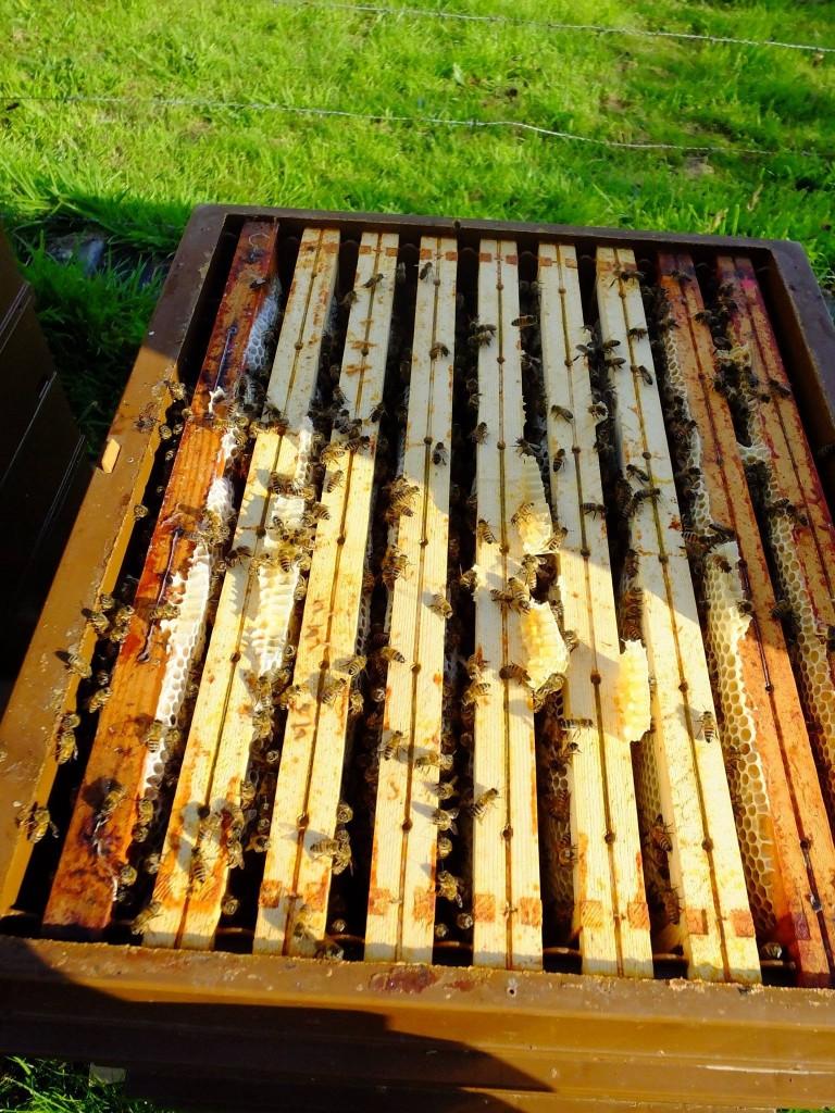 hausse miel châtaignier miellée d'été