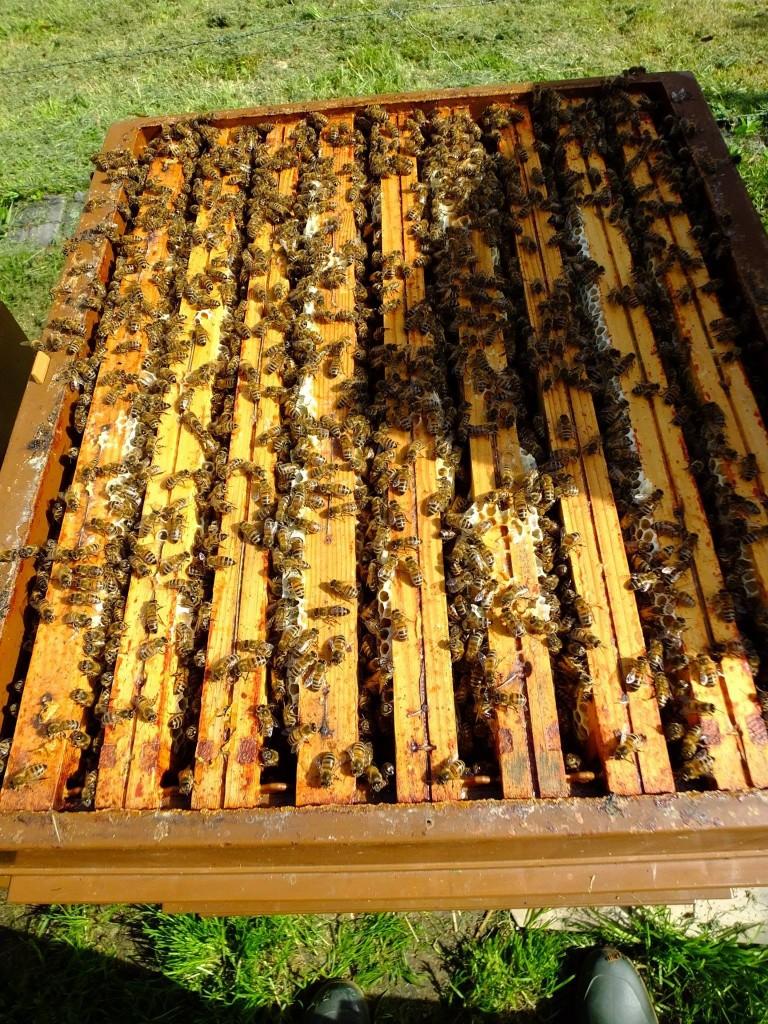 hausse à miel pleine