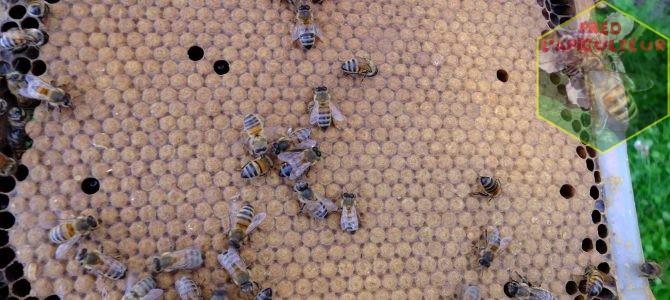 Evaluation et marquage des reines abeilles