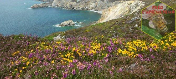 Vacances 2016: Camaret-Crozon (Bretagne-Finistère): 3ème partie, le Cap de la Chèvre