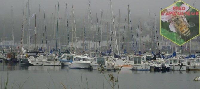 Vacances 2016: Camaret-Crozon (Bretagne-Finistère): 10ème partie, dernier jour…Pêche à pied et Camaret