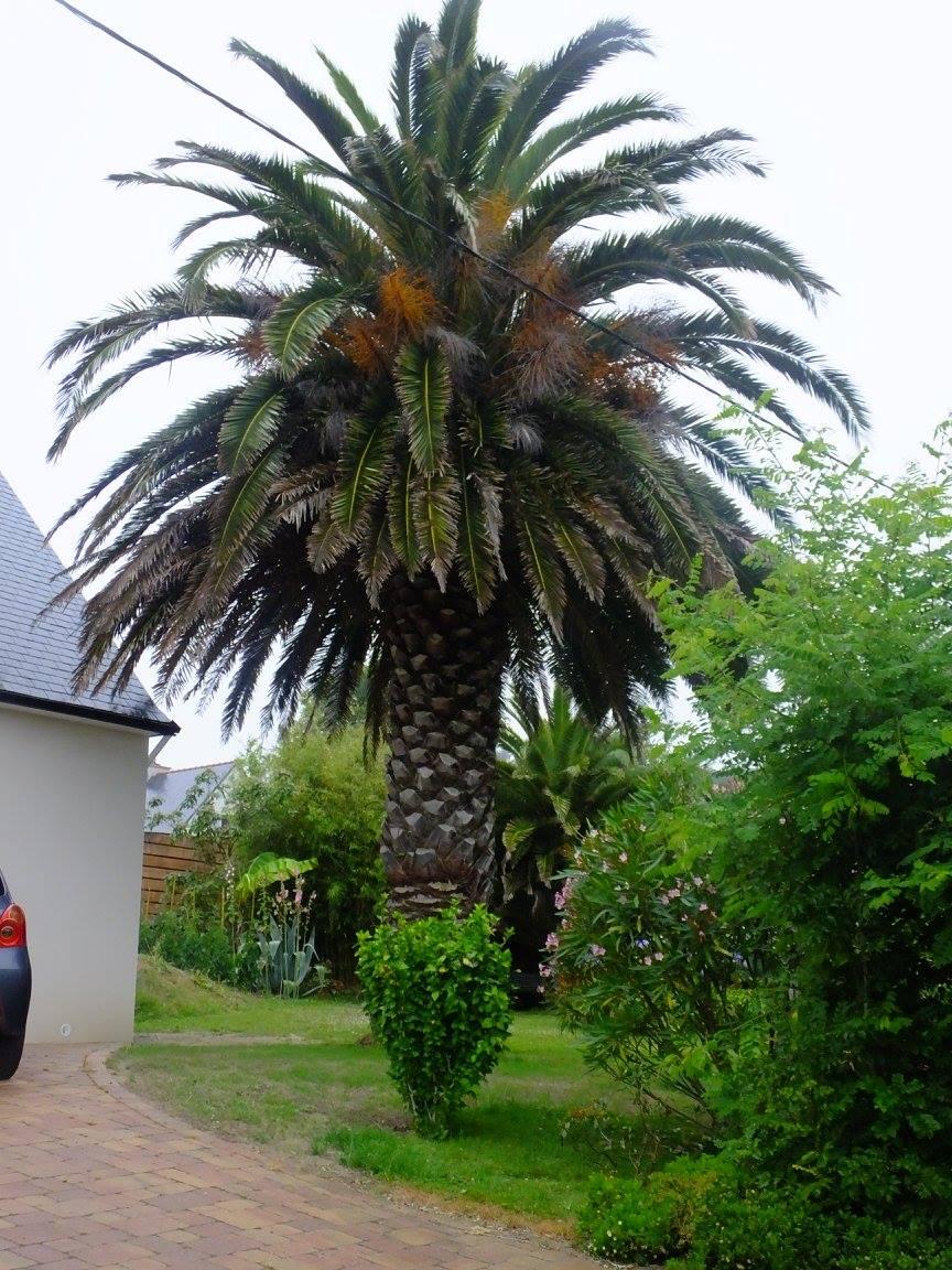 bretagne crozon palmier