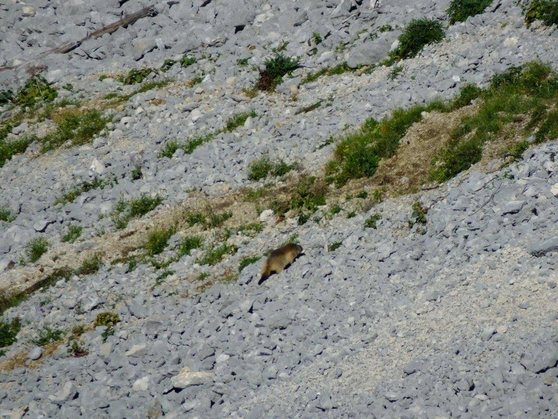 Massif Chartreuse charmant som marmotte