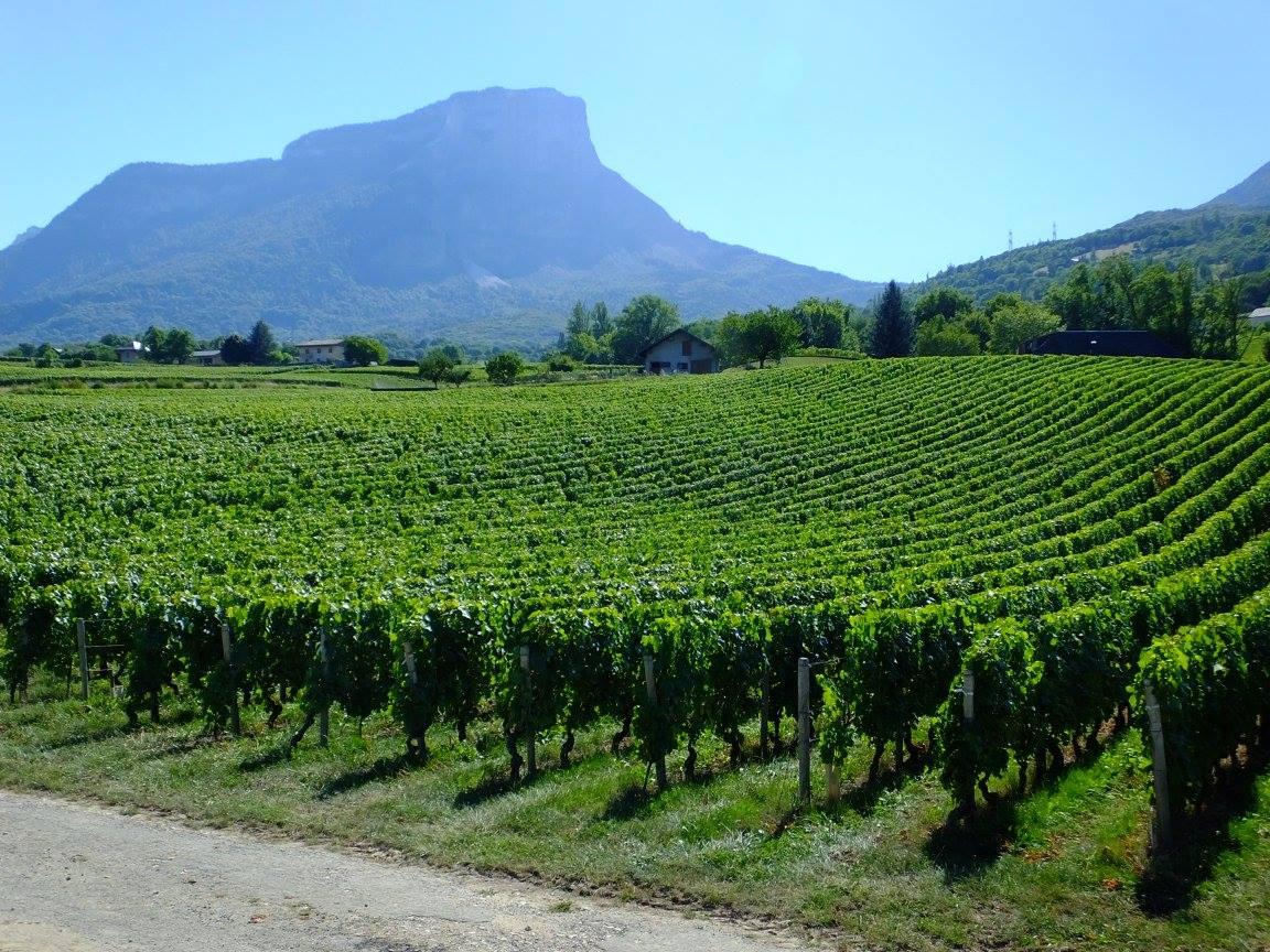 massif chartreuse granier vignoble