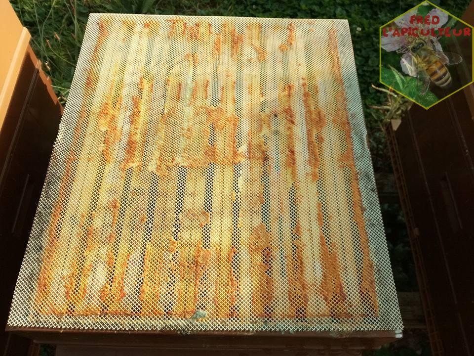 grille-propolis