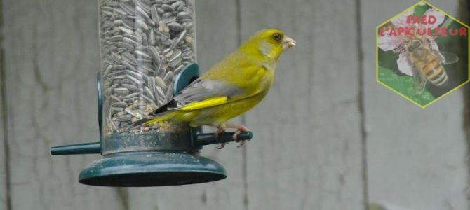 Ornithologie et photo-nature (1ère partie)