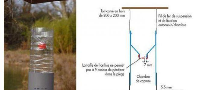 Moyens de lutte contre le frelon asiatique (Vespa velutina)