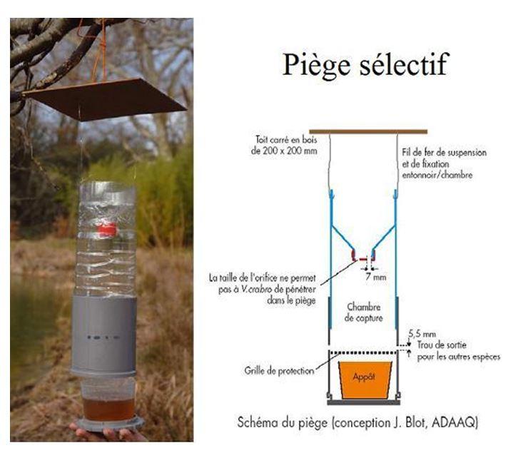 piege-selectif-frelon-asiatique-velutina