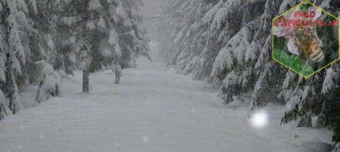 Grosse neige du 14 janvier 2017: Plateau des Tailles (Belgique)