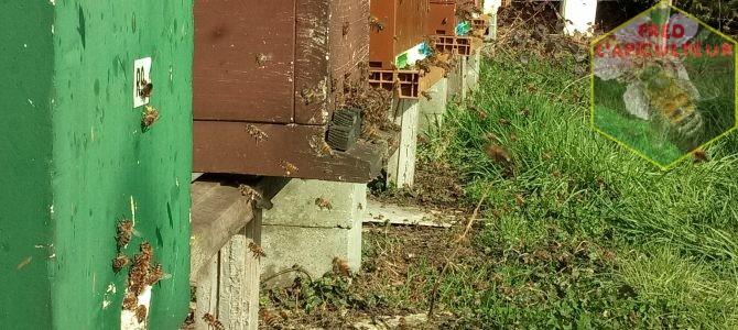 Premières sorties des abeilles 2017
