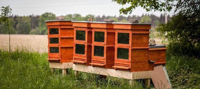 Thermosolarhive: encore une nouvelle ruche révolutionnaire?