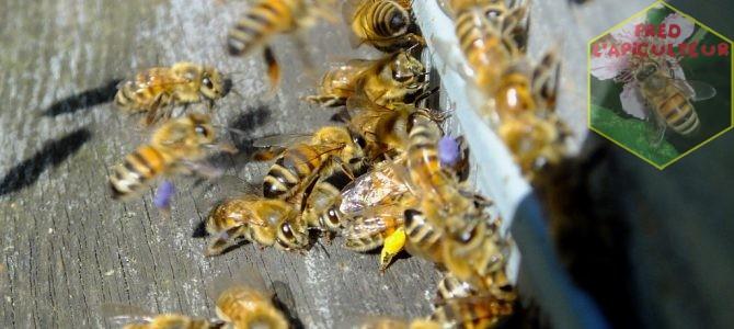 Fin de saison au rucher