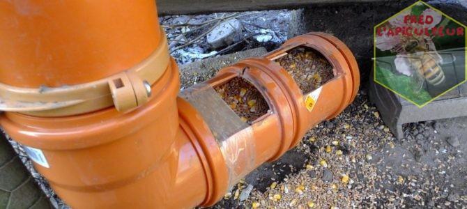 Mangeoire silo pour la basse-cour