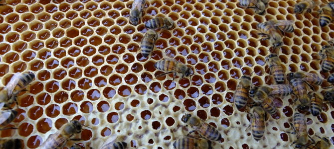 Belle semaine au rucher!
